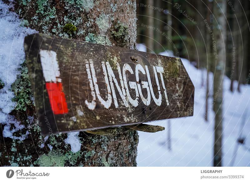 Wegweiser- Jung. wandern jung gut ausgebildet Berge Wald Austria Österreich gehen hiking Suche Freude Einsam allein