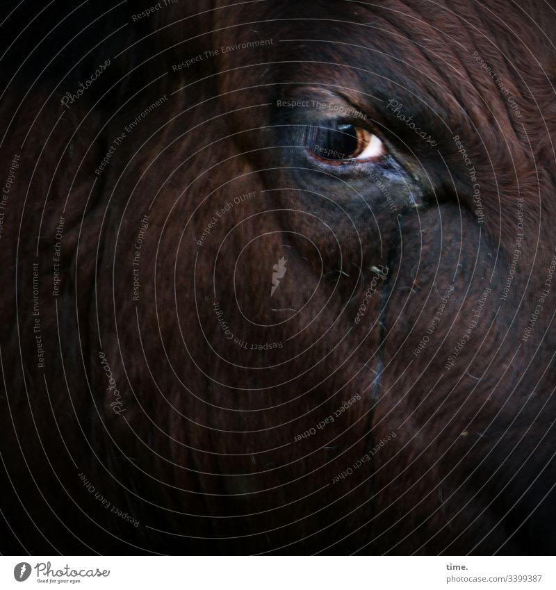 stille Beobachterin kuh sehen schauen beobachten skeptisch ernst traurig trauer dunkel intensiv tiergesicht tierportrait auge hautfalte fell