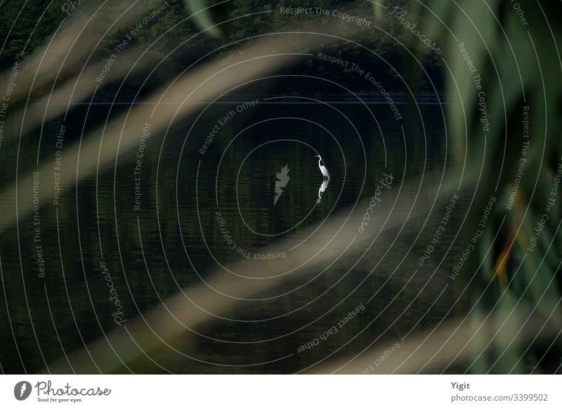 Demoiselle Kranich Sonnenbad ägäisch anthropoides Baden Windstille Demoiselle-Kran Umwelt Wald grün Lagune mediterran Frieden friedlich Pflanzen Betrachtungen