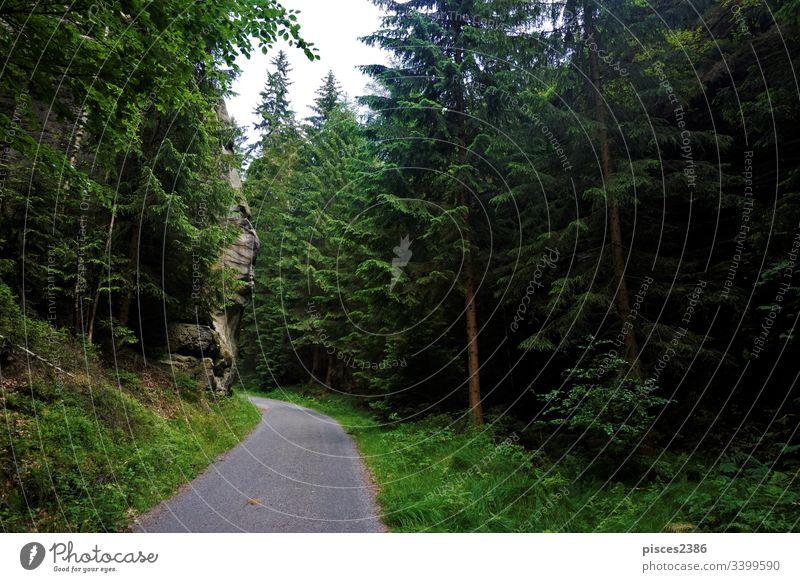 Waldweg zwischen Hinterhermsdorf und dem Kirnitzschtal Klippen Hügel Landschaft Ausflugsziel Deutschland wandern Europa Elbsandsteingebirge kirnitzsch Tal