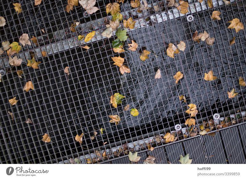 Herbstlaub auf der Gitterroste Herbstfärbung Wassertropfen Pfütze herbstlich Blatt Herbstbeginn nass Reflexion & Spiegelung