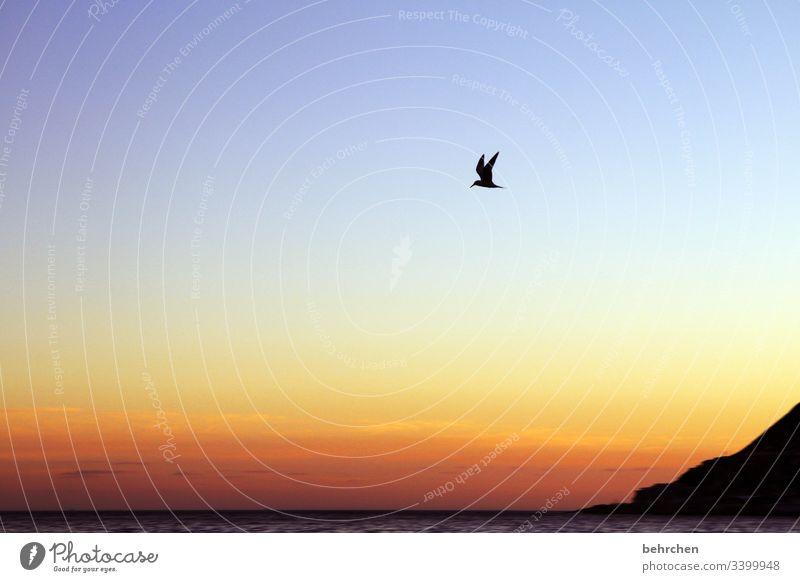 freiheit | frei wie ein vogel besonders genießen Wasser Natur Sehnsucht träumen Sonnenlicht Menschenleer Ferien & Urlaub & Reisen Tourismus Ausflug Freiheit