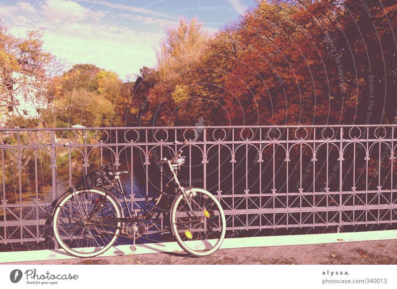 Oh du schöner Herbst! Natur Wasser Baum Fluss Stadt Brücke blau braun Farbfoto Außenaufnahme Menschenleer Tag Schatten Reflexion & Spiegelung Sonnenlicht