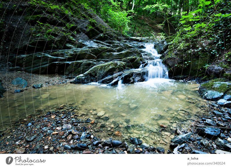 let it flow Umwelt Natur Pflanze Urelemente Erde Wasser Frühling Wald Felsen Berge u. Gebirge Schlucht Flussufer Bach Wasserfall Stein ästhetisch kalt nass
