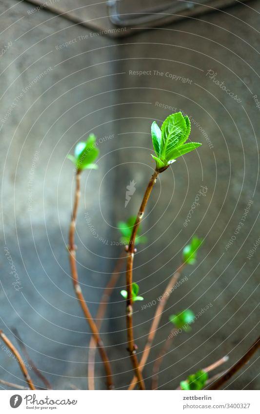 Knospe blüte knospe Frühling Pflanze grün Außenaufnahme Natur Nahaufnahme Garten Schwache Tiefenschärfe hinterhof innenhof ecke nische ast zweig frisch wachstum