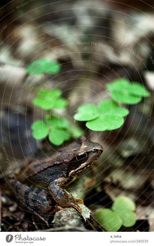 unten Natur grün Pflanze Tier Blatt Wald Umwelt kalt Frühling braun Erde Wildtier sitzen Idylle warten nass