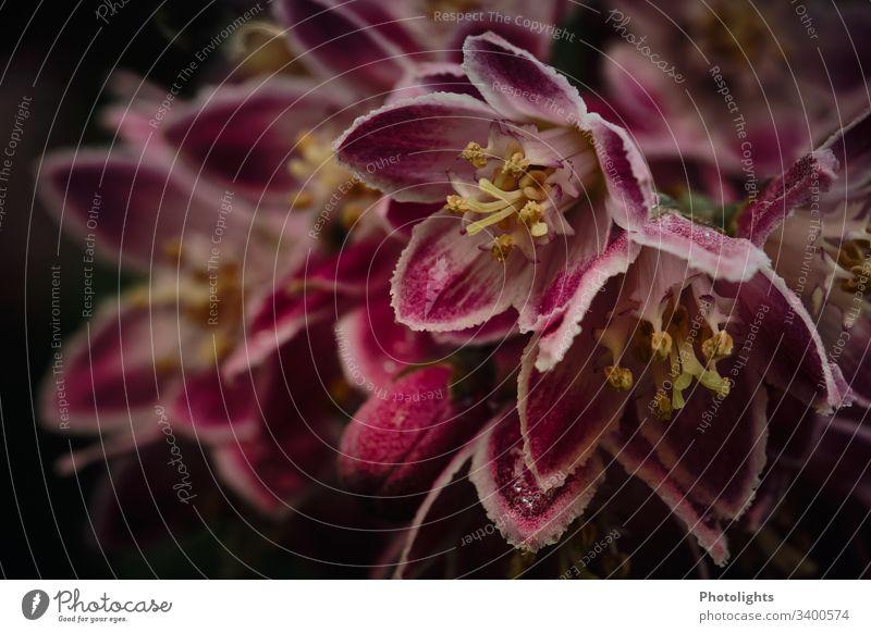 Blüten Nahaufnahme Detailaufnahme Außenaufnahme Wachstum Blühend Blume Sommer Pflanze Natur verträumt Macro gelb rot pink schwarz grün Farbfoto Menschenleer