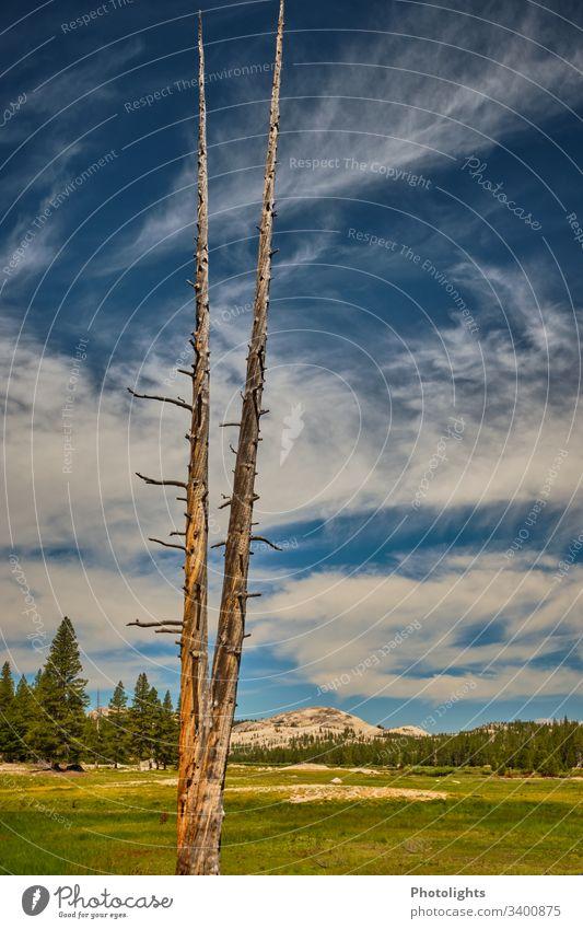 Tioga Pass - Yosemite NP Außenaufnahme Berge u. Gebirge blau Schönes Wetter Himmel Farbe Klettern Natur Farbfoto USA Inspiration einzigartig Idylle Identität
