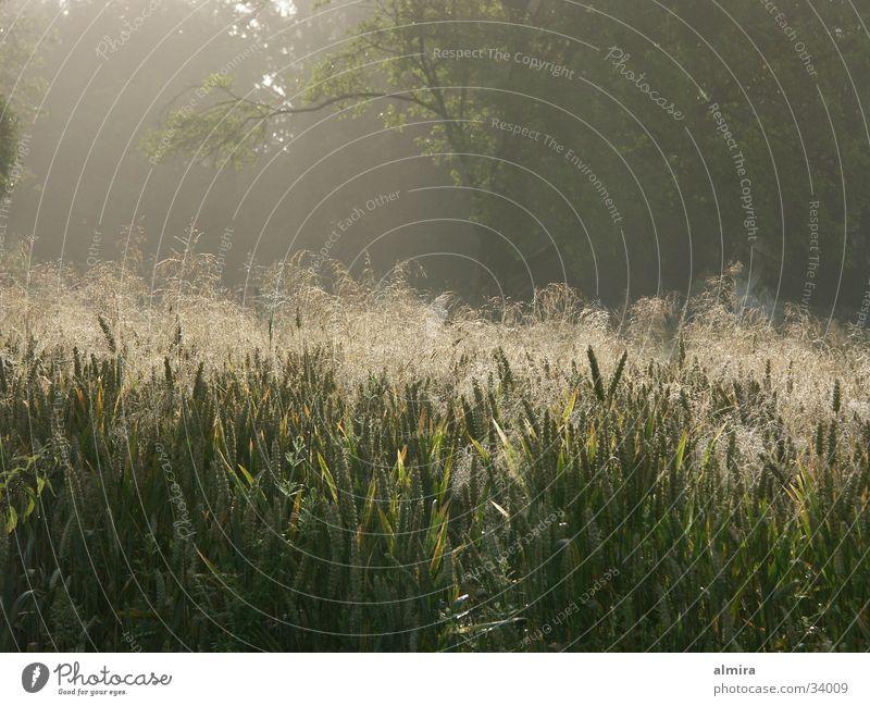 Morgenlicht Stimmung Wiese Gegenlicht Gras Sommer frisch Seil Nebel Freude