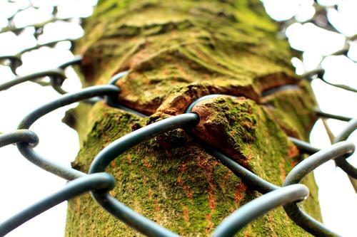 Der Zaun im Baum Baumstamm Baumrinde Natur Außenaufnahme grün Wald Umwelt Tag Farbfoto Holz Wachstum Frühling natürlich Sonnenlicht Schönes Wetter mehrfarbig