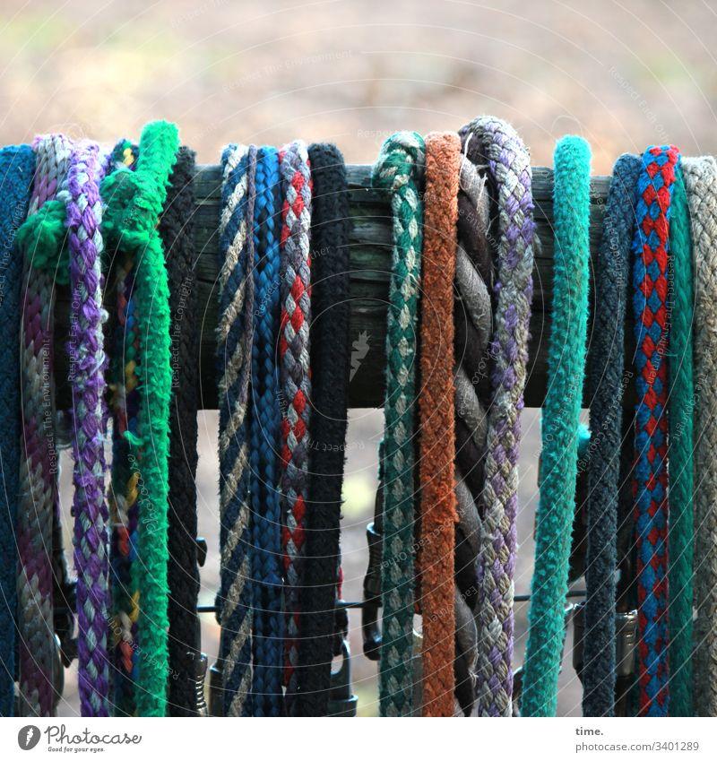 Seilschaft | neulich an der Pferdekoppel bänder seile strippe leine tau bunt hängen pferdewirtschaft geflochten textil kunststoff knoten holz zaun gewebt