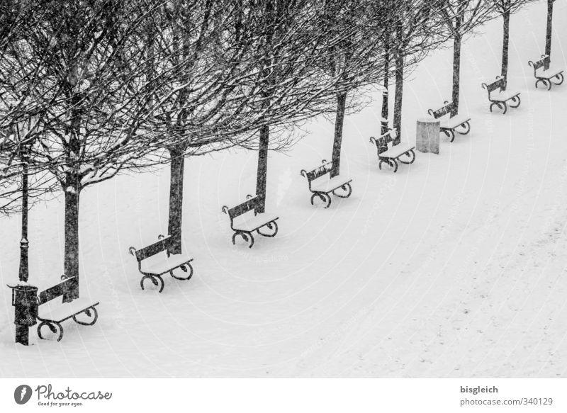 Prager Winter Baum Hauptstadt Park Platz schwarz weiß Schnee kalt Bank Schwarzweißfoto Außenaufnahme Menschenleer Textfreiraum unten Tag