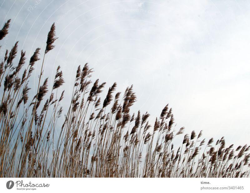 Küstenpublikum gras küste ostsee wachsen gemeinsam gesellschaft dunkel phantasie bewegung lebendig rauschen flirren natur flora kontrast himmel sonnenlicht hell