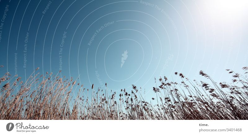 Luft & Liebe gras küste ostsee wachsen gemeinsam gesellschaft dunkel phantasie bewegung lebendig sehnsucht rauschen flirren natur flora kontrast himmel