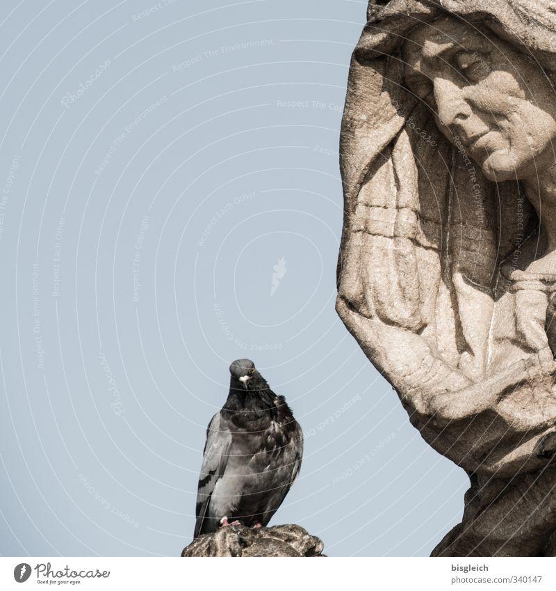 Prager Taube Deutschland Europa Vogel 1 Tier Statue Stein sitzen blau braun grau Tod Trauer Farbfoto Außenaufnahme Menschenleer Textfreiraum links Tag