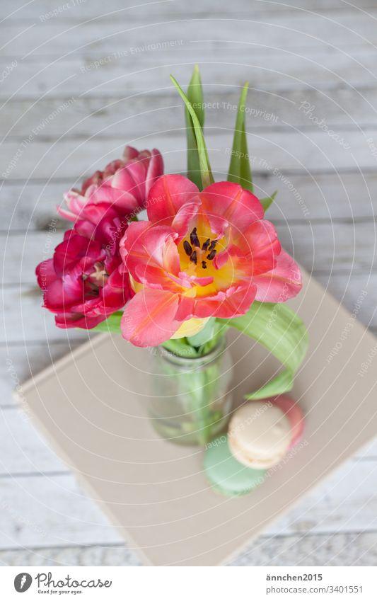 Frühlingserwachen Tulpe Pflanze Blatt Blüte Blume Blumenstrauß Vase Macarons Innenaufnahme Farbfoto grün Blühend Tag rosa Natur rot Dekoration & Verzierung