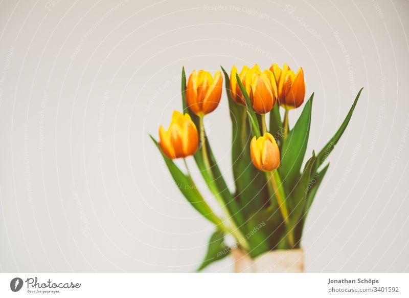 schöne Tulpen vor hellem Hintergrund als Geschenk zum Muttertag Blütezeit Blumenschmuck Schönheit und Schönheit Blumenstrauß Vor hellem Hintergrund Nahaufnahme