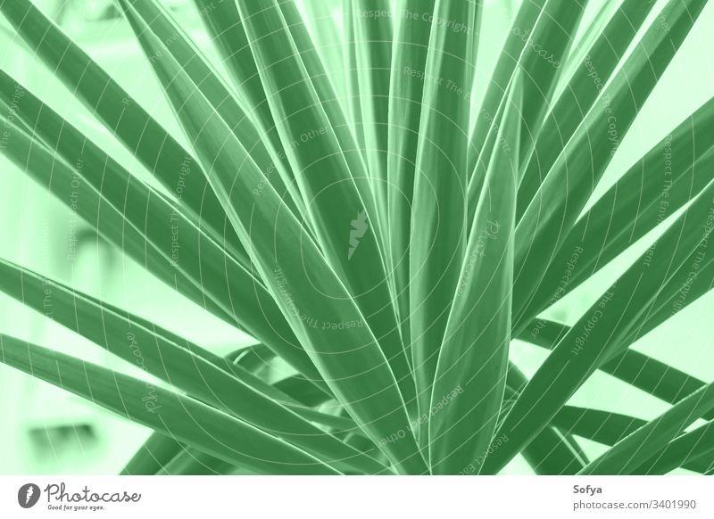 Sukkulente in der Stadt. Minzgrüne Farbe Natur Sommer Frühling Design zartes Grün 2020 Stilrichtung trendy Minze mentol modern Neogrün grüne Minze Farbe Jahr