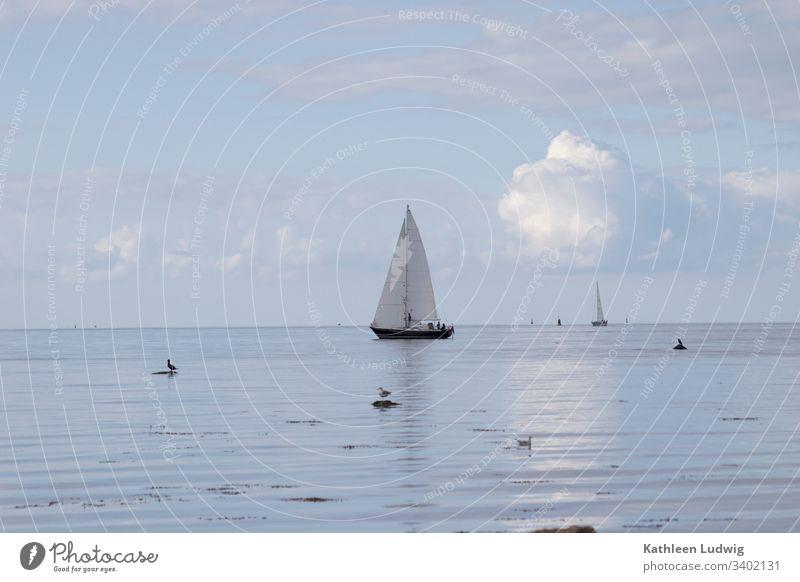 Ein Segelschiff auf der Ostsee vor der Insel Poel. Boot Segelboot Ocean Meer Möwen Vögel Natur Wasser blaues Meer
