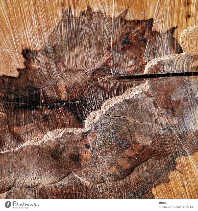 Schnittstelle holz schnittholz baum baumstamm wald markierung liegen natur forstwirtschaft markiert frisch rund geschnitten schnittware schnittmuster kerbe