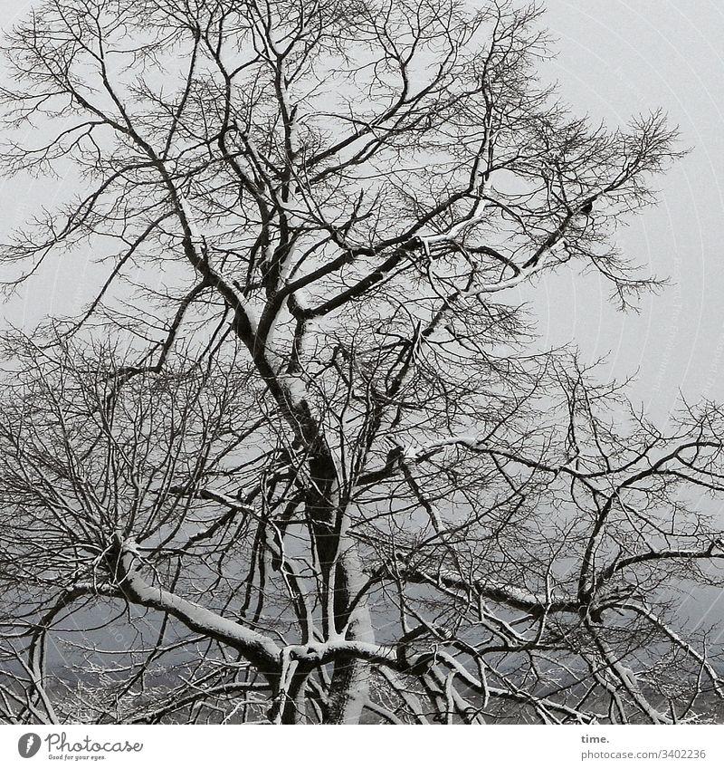 Frühjahrsstarre baum äste zweige baumstamm himmel komplex verwirrend leben kahl tod kühl hängen winter schnee frost kalt