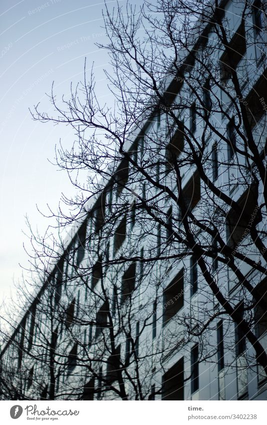 Winterschlaf ast baum zweig himmel skurril silhouette natur vordergrund hintergrund winter fassade haus blau bläulich kalt perpektive fenster