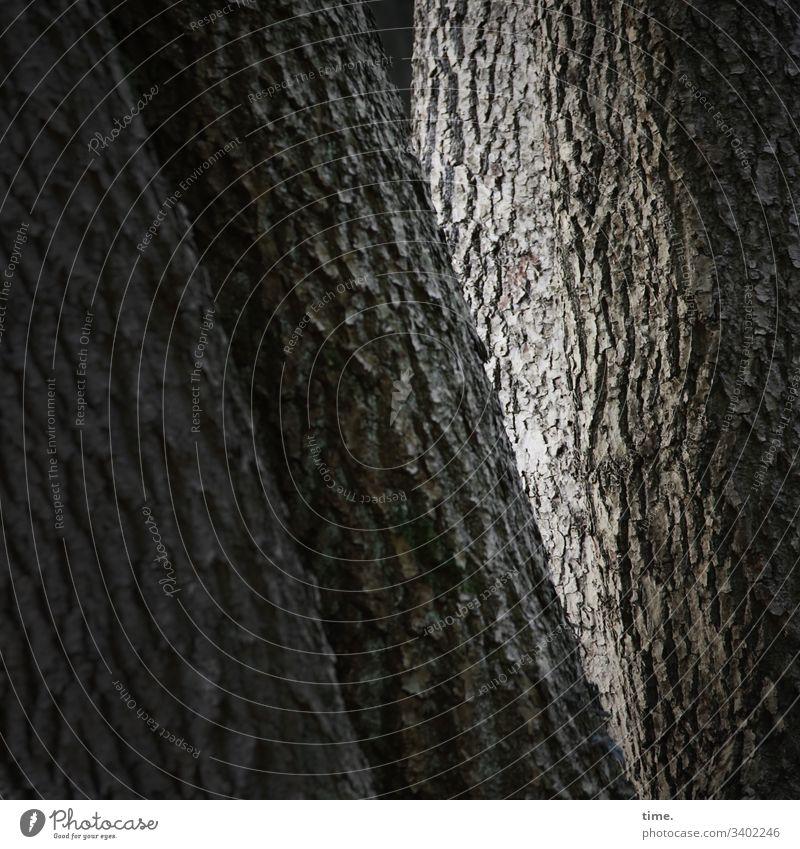 Altersweisheit baum rinde baumstamm orientierung im wald gegensatz faser kommunikation vegetation urwüchsig rätsel unterwegs wanderweg streifen eiche furche