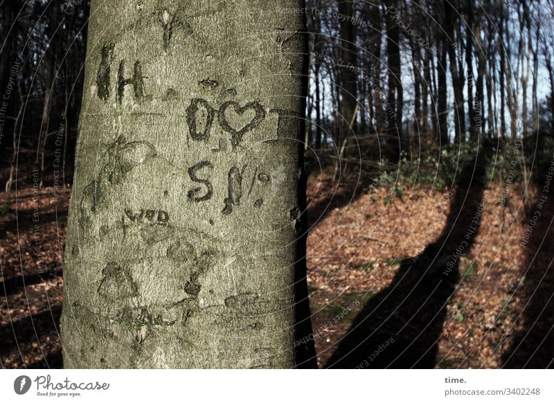Baum & Botschaft baum rinde baumstamm markierung orientierung hinweis buche im wald gegensatz kommunikation vegetation urwüchsig rätsel farben unterwegs