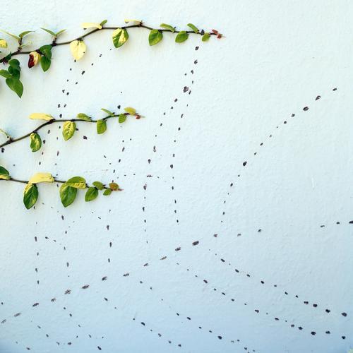 Spuren der Ahnen Weinpflanze wand Haftwurzeln Flecken Punkte organisch grün Wachstum zweig Ausleger