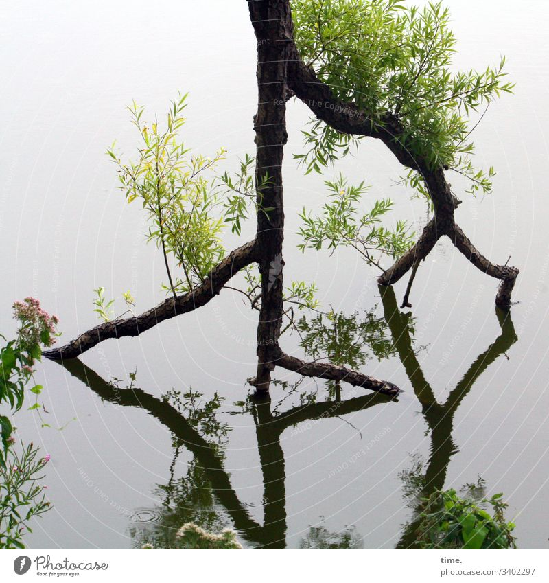 Lebbe geht weider baum wasser spiegelung treibe leben kraft natur neu wachstum verrückt widerstand widerspruch kreativität feucht überleben frisch jung see