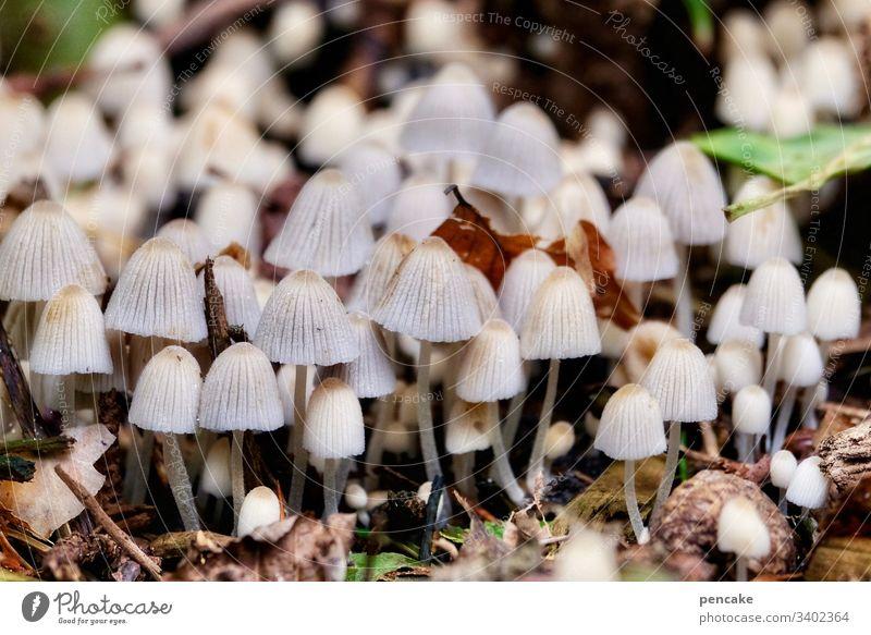 nur nicht drängeln, alle kommen dran | corona thoughts Pilze viele Menge Wald Massenveranstaltung Nähe klein Makroaufnahme Nahaufnahme Farbfoto Natur Herbst