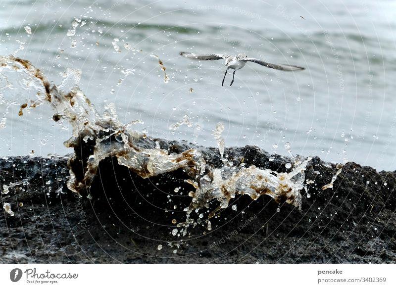 und abflug! Möwe fliegen Welle Meer Ostsee Darß spritzen Wasser Vogel Abflug Flucht Himmel Küste Strand Farbfoto Flügel Möve Freiheit frei