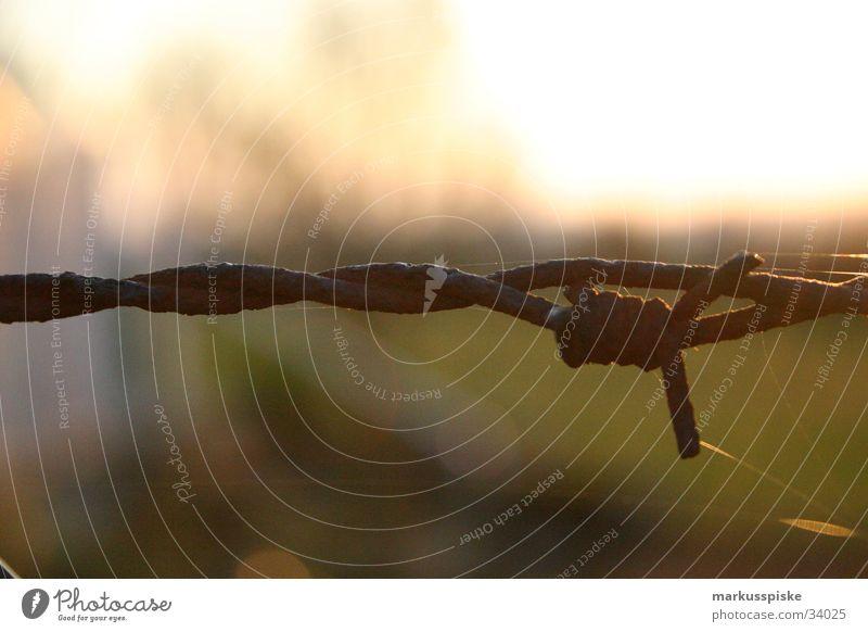Stacheldraht Zaun Draht gefährlich gesperrt Barriere Dinge Himmel Sonne Rost verletztungsgefahr