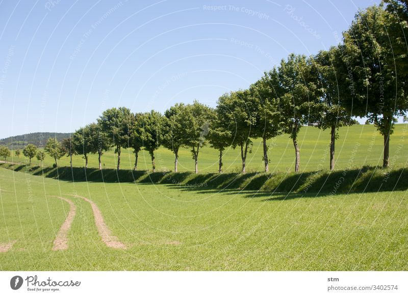 Mit Bäumen gesäumter Weg Straße allee reise Landleben sommertag wandern Fortbewegung bäume baumreihe Landschaft Kultiviert Kulturlandschaft grün Allee Baum