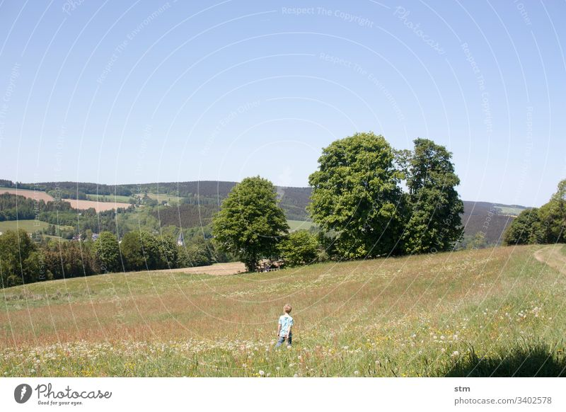 Junge steht in einer Wiese Kind Blumenwiese Kindheit Sommer Natur grün Gras Umwelt Außenaufnahme Farbfoto Schönes Wetter wandern Spielen beobachten