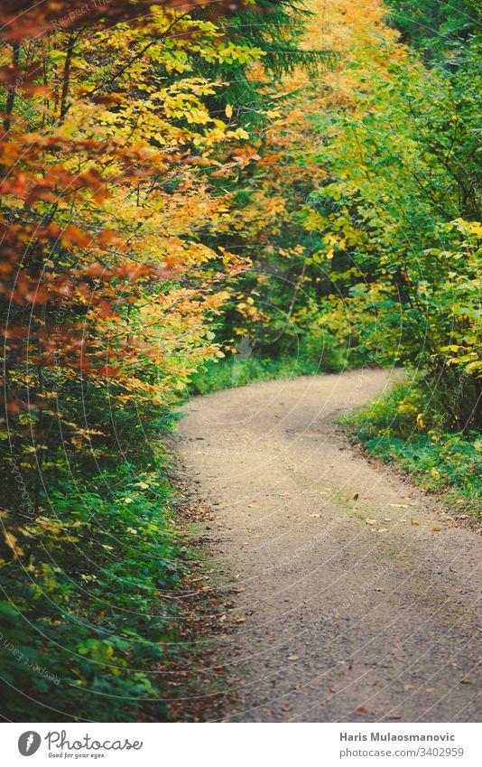Wunderschöner, farbenfroher Pfad im Wald Umwelt reisen Frühling Sonne Herbst Hintergrund Tag fallen Laubwerk Gras grün Landschaft Blatt natürlich Natur