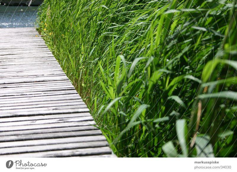 Steg Gras Schliff Holz See Meer grün Küste Wasser Sand brau blau