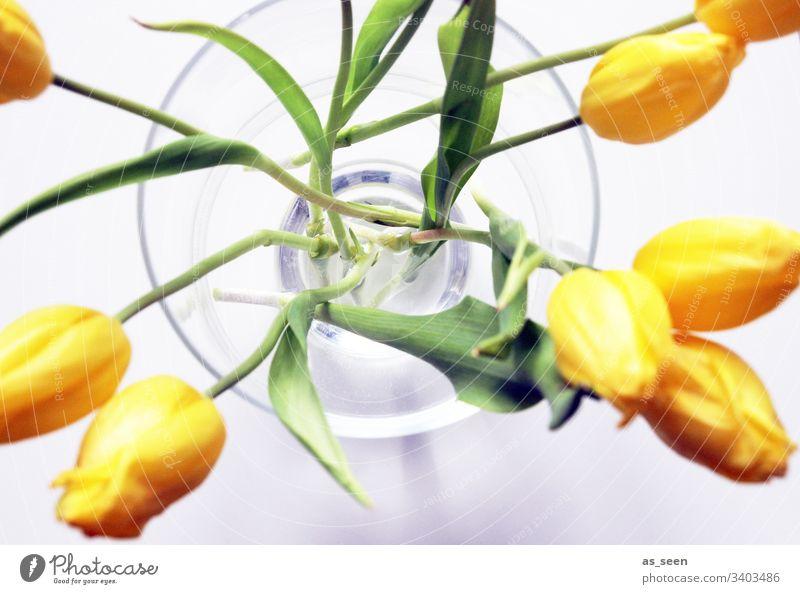 Tulpen in der Vase Blüte Blume Nahaufnahme Pflanze Frühling Detailaufnahme Natur Farbfoto Blütenblatt Schwache Tiefenschärfe Menschenleer Blühend Tag Unschärfe