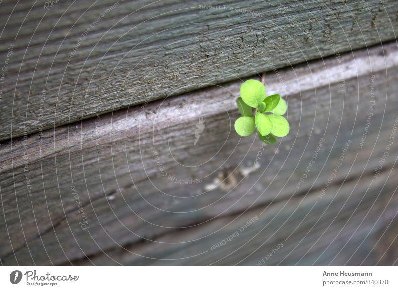 Durchbruch Natur grün Sommer Pflanze Blume Blatt Umwelt Wand Leben Frühling Mauer Holz grau Garten Kraft Erfolg