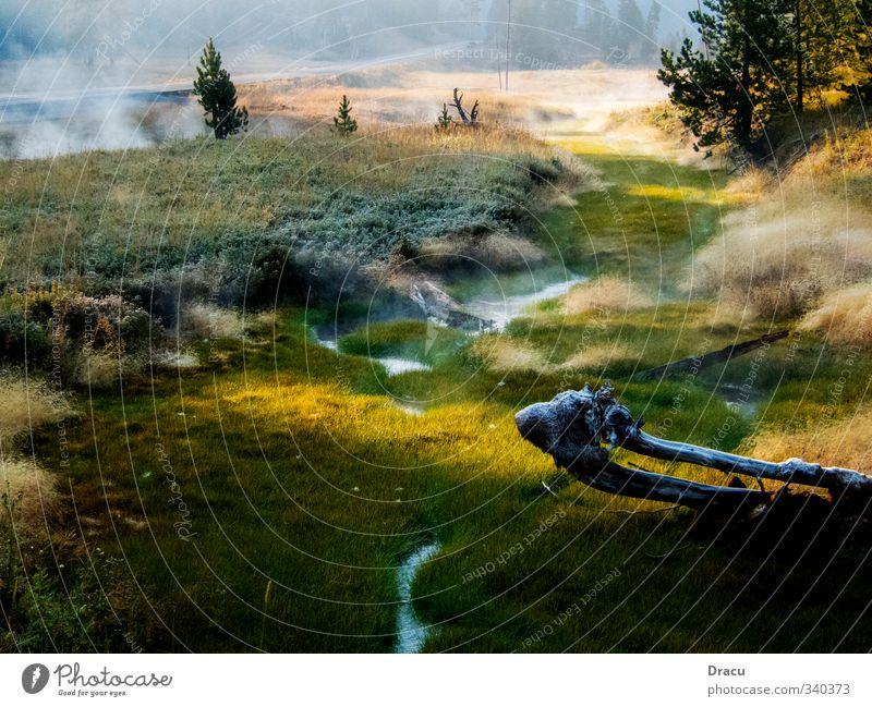 Natur pur Landschaft Pflanze Wasser Sonnenaufgang Sonnenuntergang Sonnenlicht Sommer Schönes Wetter Nebel Baum Gras Moos Grünpflanze Wildpflanze Park Wald