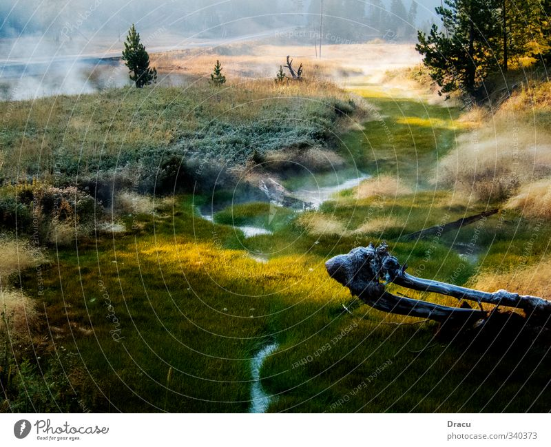 Natur pur Wasser Pflanze Sommer Baum Einsamkeit Landschaft Wald Gefühle Gras Park Nebel Schönes Wetter Trauer Sehnsucht Leidenschaft