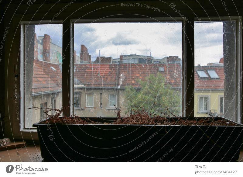 Hoffenster Fenster Hinterhof Architektur Haus Farbfoto Tag Stadt Menschenleer Bauwerk Altstadt Prenzlauer Berg Berlin Altbau Blick nach oben Stadtzentrum