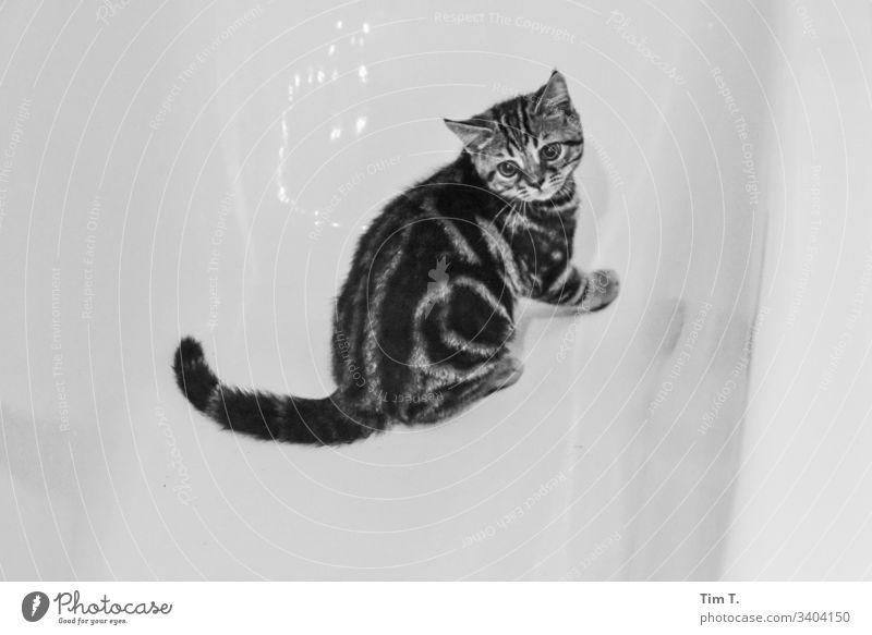Badewanne mit Katze Tier Haustier Innenaufnahme Tierjunges niedlich Blick Neugier Tierporträt Tiergesicht beobachten Schwache Tiefenschärfe schön