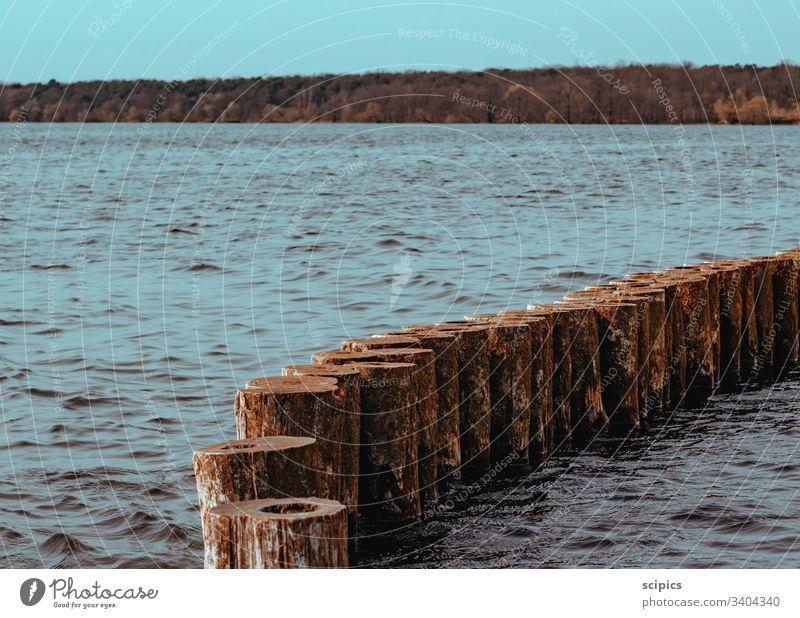 Waldsee mit Buhnen Wasser See Meer wald Bäume Baum Holz Wellen ruhe Menschenleer Ostsee Küste Ferien & Urlaub & Reisen Landschaft Mecklenburg-Vorpommern