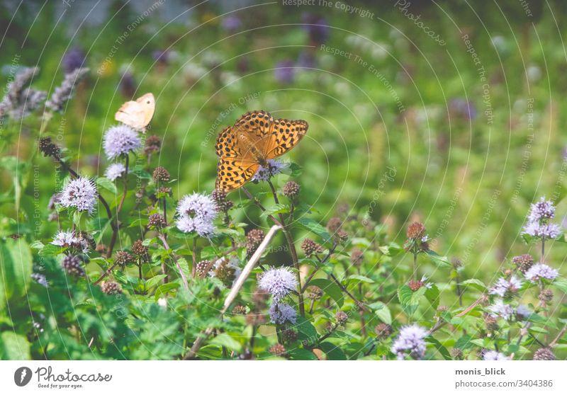 Blumenwiese Schmetterling Wiese Ostern frühling Farbe bunt Blüte Blumenstrau´ß Osterzeit Nahaufnahme Feste & Feiern Farbfoto Design Tradition Frühling Postkarte