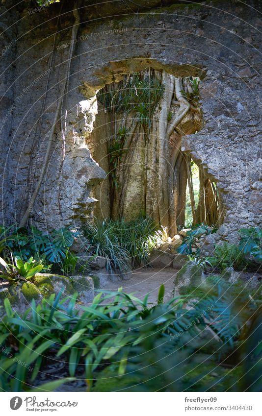 Detail eines verlassenen Gebäudes inmitten des Dschungels Expedition Verlassen Kirche Ruinen Erkundung im Freien tropisch Umwelt Natur Vegetation Pflanze Erbe