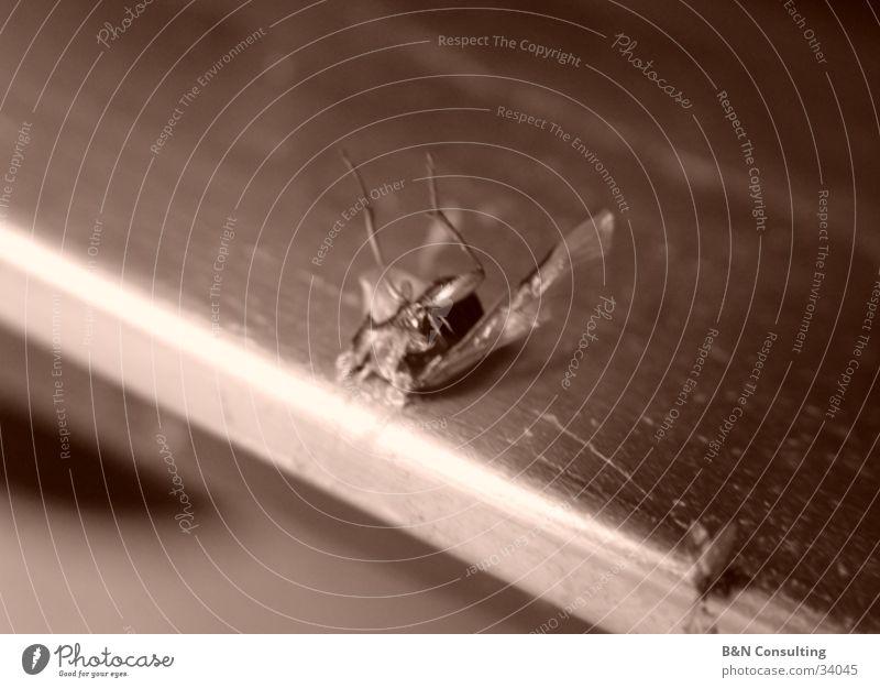Fliegentod Tod grau Metall Verkehr kaputt Ende Flügel Insekt nerven Grauwert zerdrückt