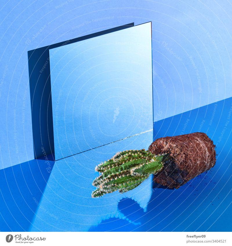 Stillebenraum mit einem Spiegel und einem Kaktus aus dem Topf blau noch Stillleben hart Licht Wand Quadrat quadratisches Format kalt leer Niemand niemand Objekt
