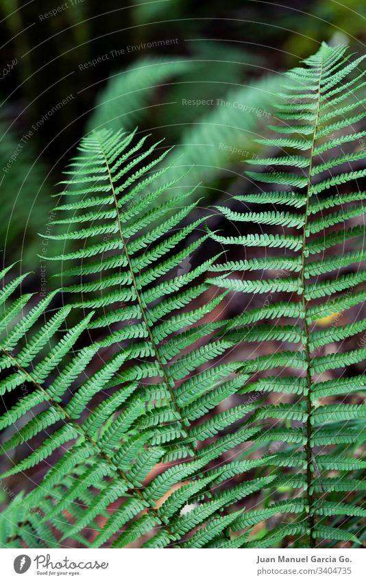 Farne im Vordergrund Wurmfarn grün Natur Wald tropisch Baum im Freien Blätter Flora Laubwerk Blatt Pflanze natürlich Sommer Dschungel Umwelt Landschaft Bäume