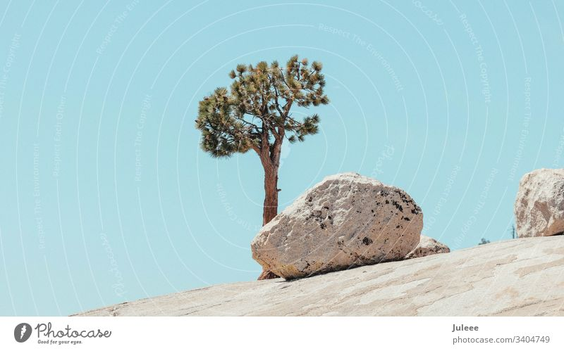 Baum und Fels im Yosemite National Park Yosemite Valley USA Amerika Kalifornien Abenteuer ruhig Sierra Nevada Wolkenloser Himmel Sommerurlaub